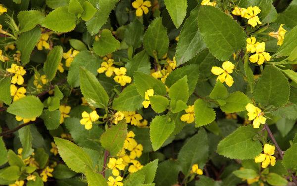 1000 new plants at Lagoon Reserve