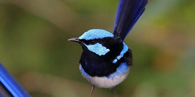 Bird Survey 4 October