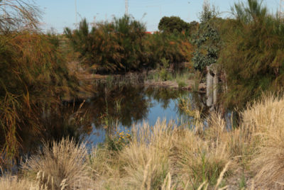 Southern Wetlands latest pics