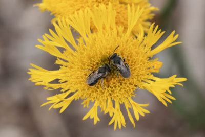 Pollinators project findings