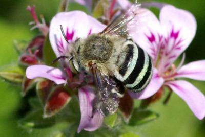 Melbourne Pollinator Corridor