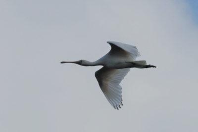 New bird species list out