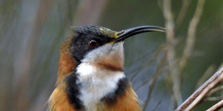 Bird survey July