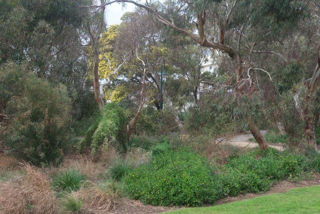 Planting Lagoon Reserve. Pic: Janet Bolitho