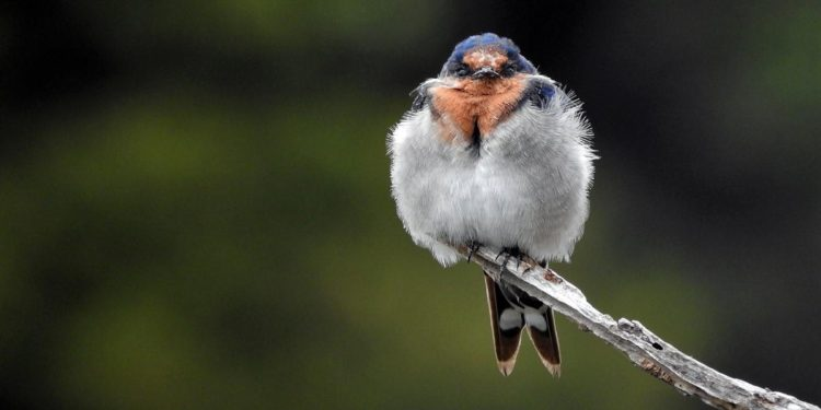 Bird survey April